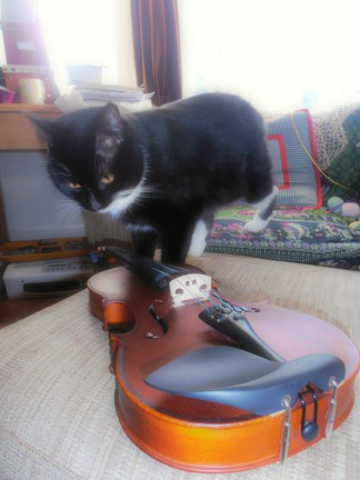 And on violin today we have the one and only Morris the cat!
